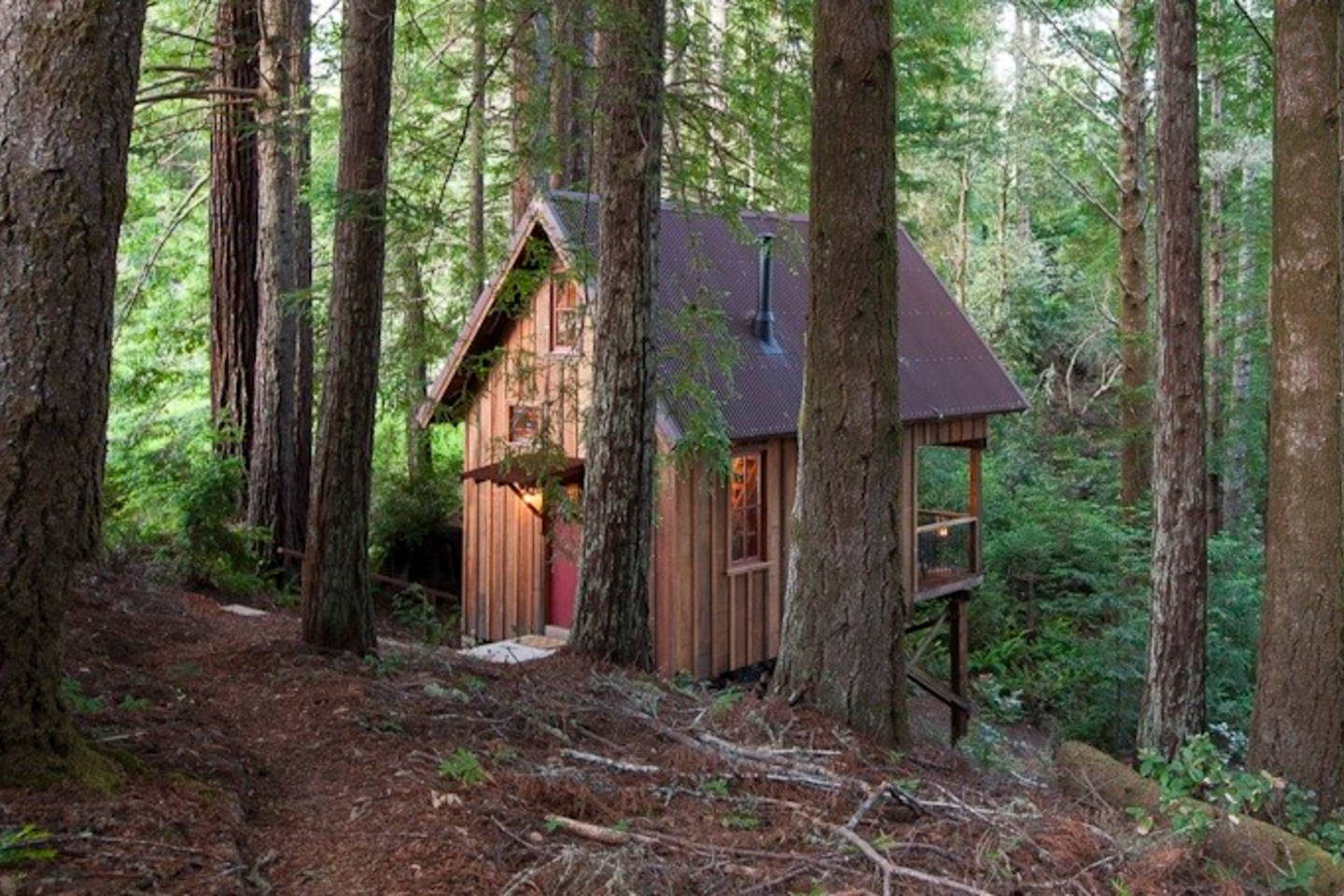 Perfect Owl Tree Cabin, A Tiny Cabin That Feels Like A Treehouse. It Has A